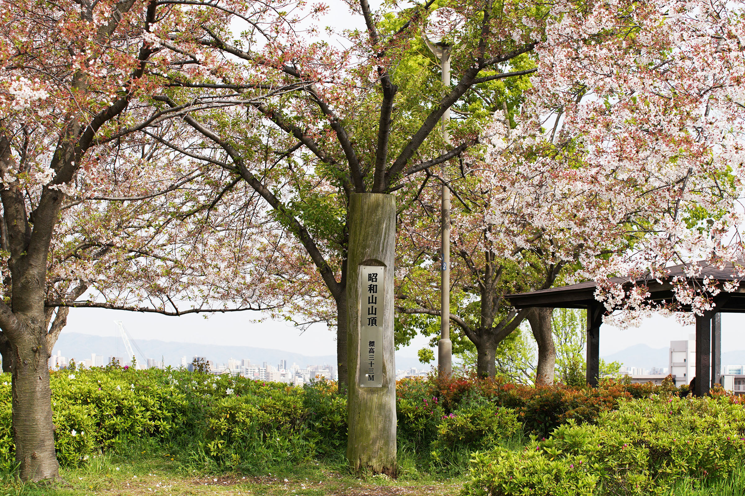 こんにちは大正5月号|2020.5 昭和山(大阪市大正区)